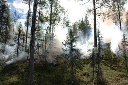 Metsää ei pidä nyt sytyttää – suurpalon todennäköisyys kasvanut merkittävästi Oulu-Koillismaan alueella