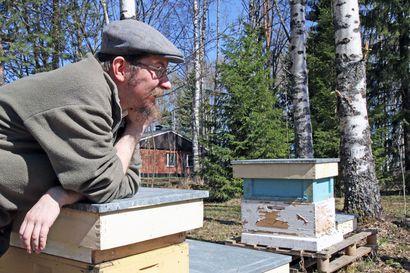Pistääkö mehiläinen tarhuria? Miten se hunaja oikein syntyy? Kuuntele Mehiläispäivän podcast ja tiedät!