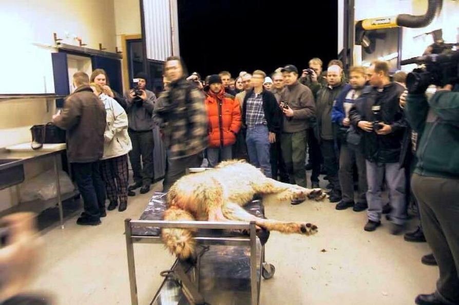 Media tutustui surmatun suden ruumiiseen helmikuussa 2001 otetussa kuvassa Norjan Osterdalenissa. Norjassa on jälleen käynnissä susijahti.