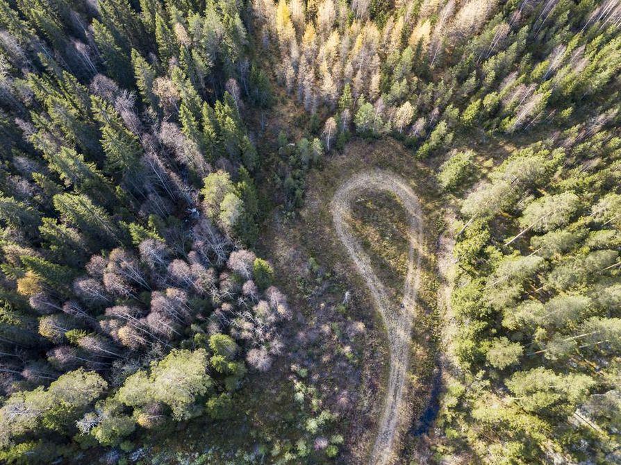 Suomi on Euroopan metsäisin maa. Kuvaaja Jarmo Kontiainen ikuisti tämän metsänäyn Lieksassa viime vuoden kesällä.