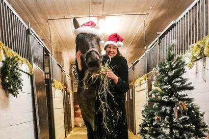 """Lappilaisten yrittäjien joulunaika sujuu vauhdikkaissa, perinteikkäissä ja sopivasti nurinkurisissa merkeissä - """"Tänä vuonna ripustimme kuusen ylösalaisin kattoon!"""""""