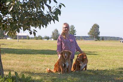 Koiramaista menoa töissä ja kotona