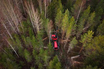 EU:n puistokomissaareja ei saa päästää päättämään metsäpolitiikastamme