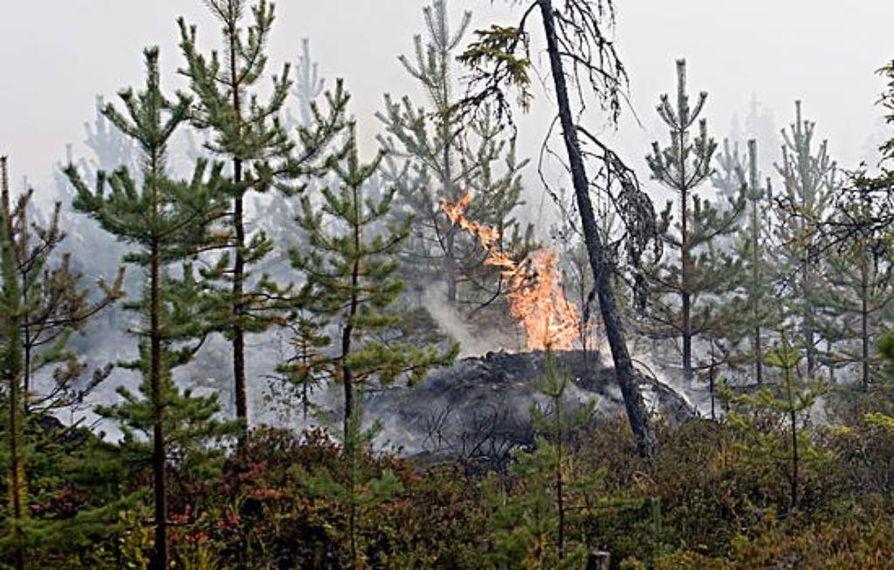 Metsäpalo Juujärvellä 23.8.2006