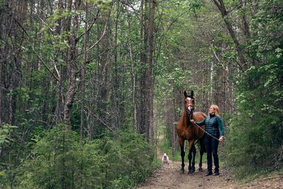 Rovaniemellä kehitetty mobiilisovellus hevosten hoitamiseen, ensimmäisenä huippuratsukoiden käytössä