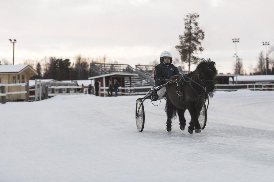 Veera Järvelä on kerryttänyt kokemusta poniraveista jo 106 kilpailulähdön verran. 16-vuotiaan ohjastajan lähitulevaisuuden suunnitelmissa on hankkia hevosajolupa ja päästä kilpailemaan hevosraveissa.