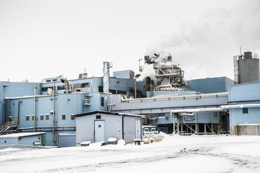 Kittilän Suurikuusikossa toimiva Agnico Eaglen kultakaivos on investoinut niin voimakkaasti, ettei yhteisöveroa ole kertynyt maksettavaksi.