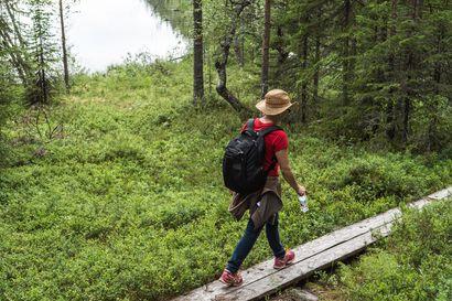 Romeikossa rymytään kaivinkoneella metsää nurin – Hossan kansallispuistossa ennallistetaan metsää, soita ja lähteitä yhteensä noin viiden neliökilometrin alueella