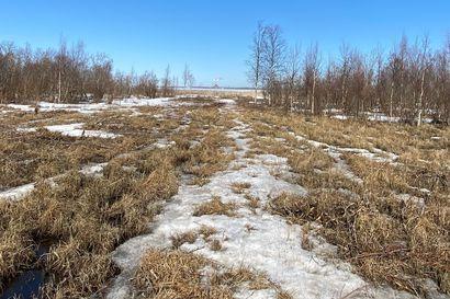 Ely-keskus: Vihiluodon kyläyhdistys raivasi luvatta luonnonsuojelualueella Kempeleenlahden rannalla, jatkotoimia harkitaan – kyläyhdistyksen mukaan kaikkeen oli lupa