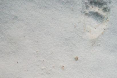 YLE: 19 karhua kaadettiin Kuusamossa – pyynti jatkuu vielä Posiolla ja Taivalkoskella