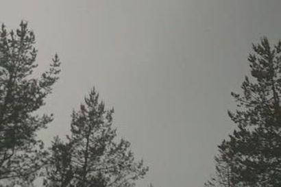 Salamointia Kuusamon Junttilassa 22.6.