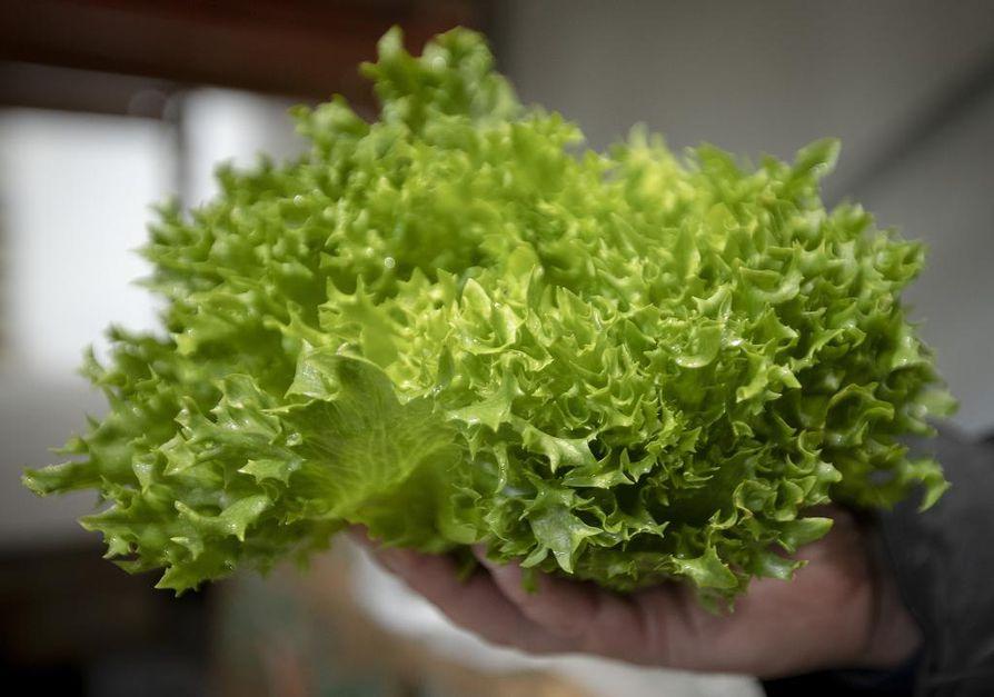 Syyskuussa toimintansa aloittavan CircMealin on tarkoitus aluksi valmistaa hedelmä- ja vihanneshävikistä muun muassa salaattiaineksia ja mehuja.