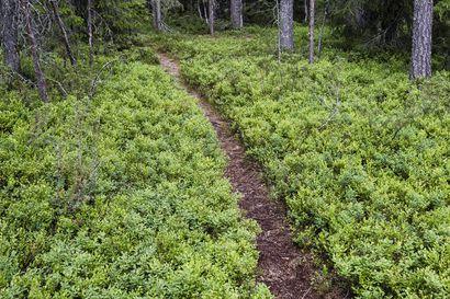 EU-komissio ei vienyt päätösvaltaa Suomen metsiin – mutta asetti uusia vaatimuksia