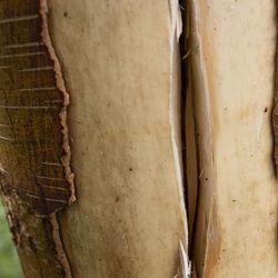 Pallosalama jätti iholle keltaisen läiskän, haapavetinen Reino Sainkangas on perehtynyt pallosalamakokemuksiin