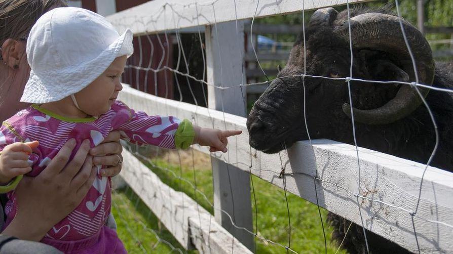 Kukka- ja eläinpuisto Escurial Limingassa on erityisesti lapsiperheiden suosiossa.