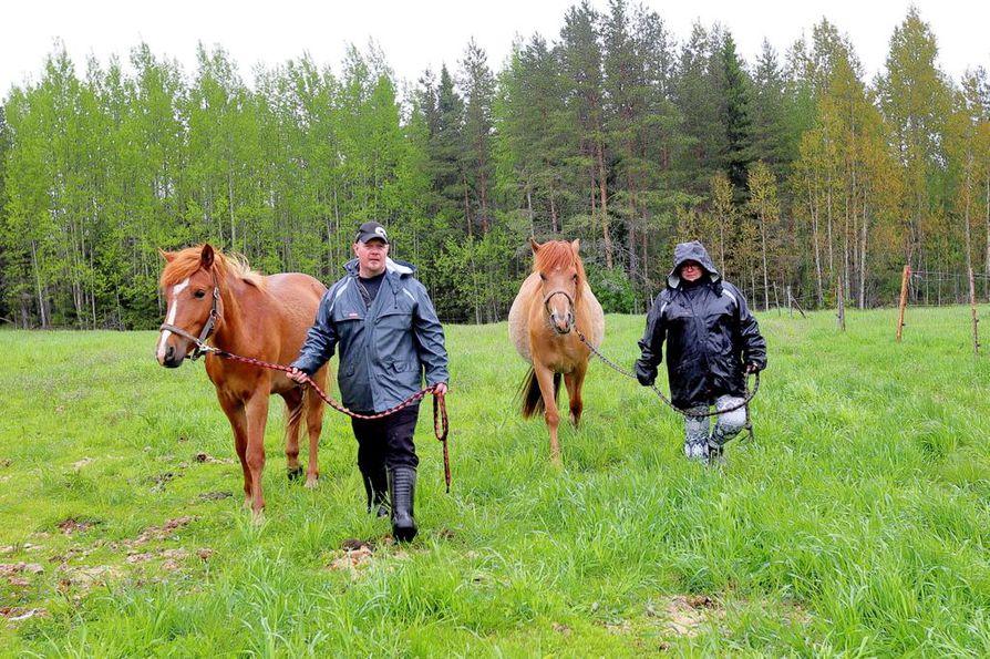 Susien säikäyttämät Tuomo ja Eija Mettovaara aitauksessa olleen tamman ja varsan kanssa.  - Susien tulo omalle reviirille muuttaa elämäämme. Yöllä jo mietimme, että miten tästä kerrotaan lapsille, Tuomo Mettovaara sanoo.
