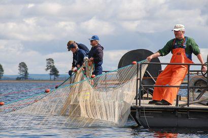 Mistä uusia kalastajia pyytämään särkeä ja haukea ravintoloiden ruokapöytiin? – Posiolla  aloitettiin vuoden hanke, jossa eläkkeelle siirtyvät kalastajat jakavat tieto-taitonsa nuoremmille