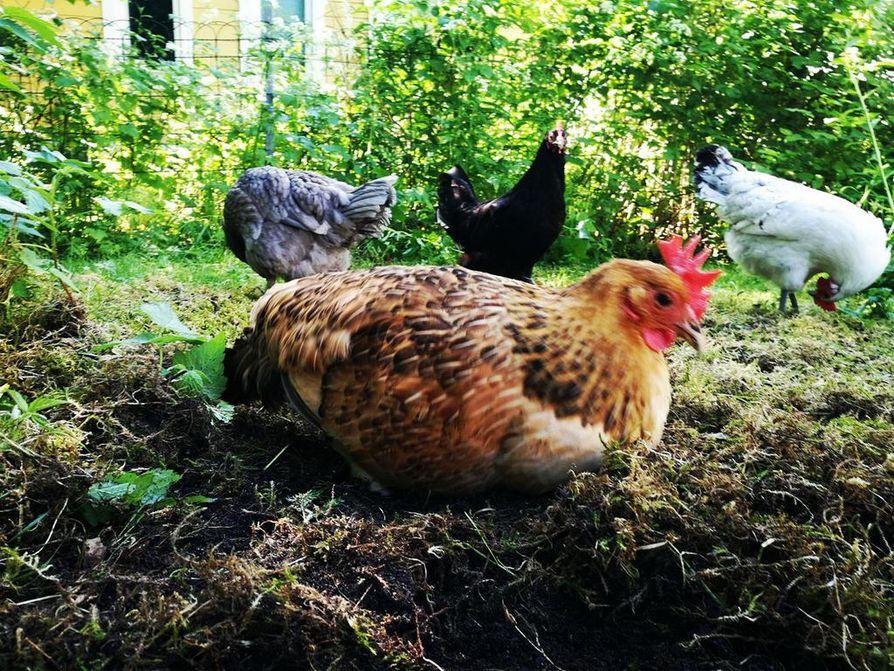 Harmaa Imelda, musta Lenita, valkoinen Margaret ja punainen Tavja ovat herättäneet hilpeyttä tempauksillaan.
