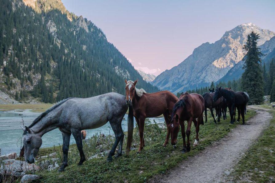 Uteliaat hevoset tulevat vuoristossa lähelle turistia. 65 prosenttia Kirgisian pinta-alasta on vuoristoa, jonka keskikorkeus on 2¿750 metriä ja korkein huippu 7¿439 metriä.
