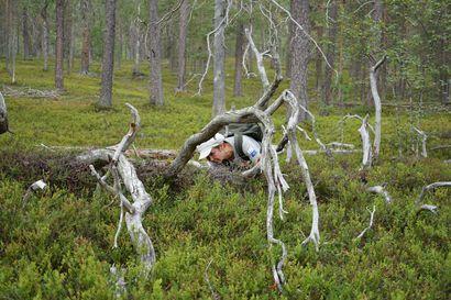 Pyhä-Luostolta löyty sammalta, jota ei aiemmin ole tavattu niin pohjoisessa – kansallispuiston lajikirjo paljastui entistä monimuotoisemmaksi