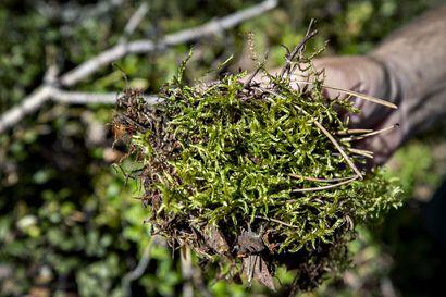 Tutkimus: Päiväkotilasten immuunijärjestelmä parani jo kuukaudessa metsäpohjaisessa pihassa