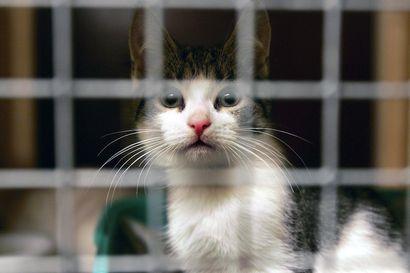 Miksi kissa on arvoton? – Suomessa päätyy kodittomaksi vuosittain vähintään 20000 kissaa