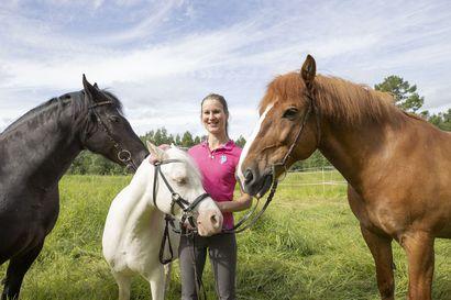 Hevosta tulee katsoa suuhun – tutkimus paljasti, että kuolainten aiheuttamat suun vauriot ovat hevosilla yleisiä