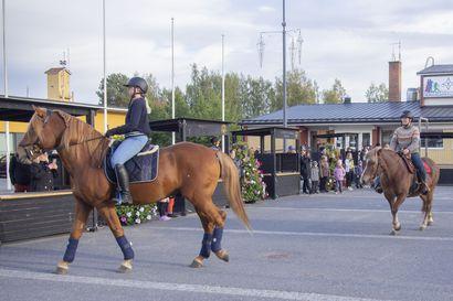 Voimalla kymmenen hevosen –suomenhevonen täyttää tänä vuonna 114 vuotta ja vähälukuinen rotu halutaan ihmisille tutuksi