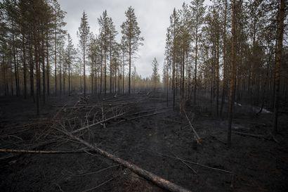 Metsä palaa alkupisteeseensä – luonnon kiertokululle metsäpalo on yksi tärkeä vaihe, josta useat lajit hyötyvät