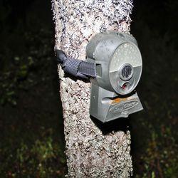 Pudasjärven Hetekylän murtomiehille ehdotonta vankeutta – tunnistus tehtiin riistakameran kuvista