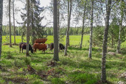 Maisema- ja kosteikkokohteille voi hakea ympäristösopimuksia – hakuaika umpeutuu kesäkuussa