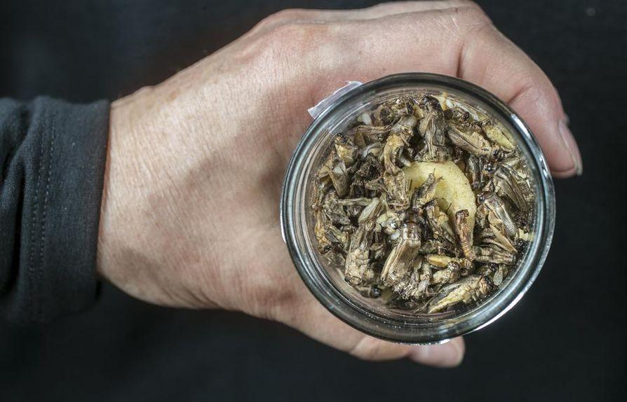 Hyönteisiä ruoaksi? Maailmalla arviolta kaksi miljardia ihmistä käyttää hyönteisiä ravinnoksi, mutta Euroopassa se on vielä harvinaista.