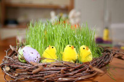 Mistä pääsiäisen munat ja puput ovat peräisin? – Odotettu kevään juhla on vanhempi kuin osaamme kuvitella