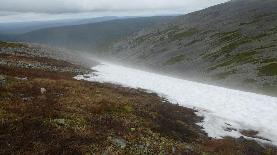 Ilmastonmuutos näkyi tuoreessa selvityksessä merkittävänä uhanalaistumisen syynä vasta esimerkiksi tunturien lumenviipymien luontotyypeissä. Seuraavalla kerralla tilanne voi olla jo toinen.