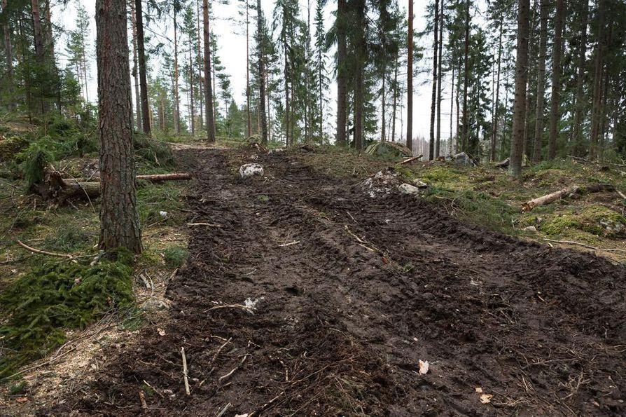 Biojalostamon raaka-aineen käytetään puuta. Kuvituskuva.