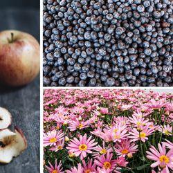 Norjasta ei jatkossa saa tuoda edes yhtä marjaa tai omenaa Suomeen ilman kasvinterveystodistusta – lainsäädäntö kiristyy jo lauantaina