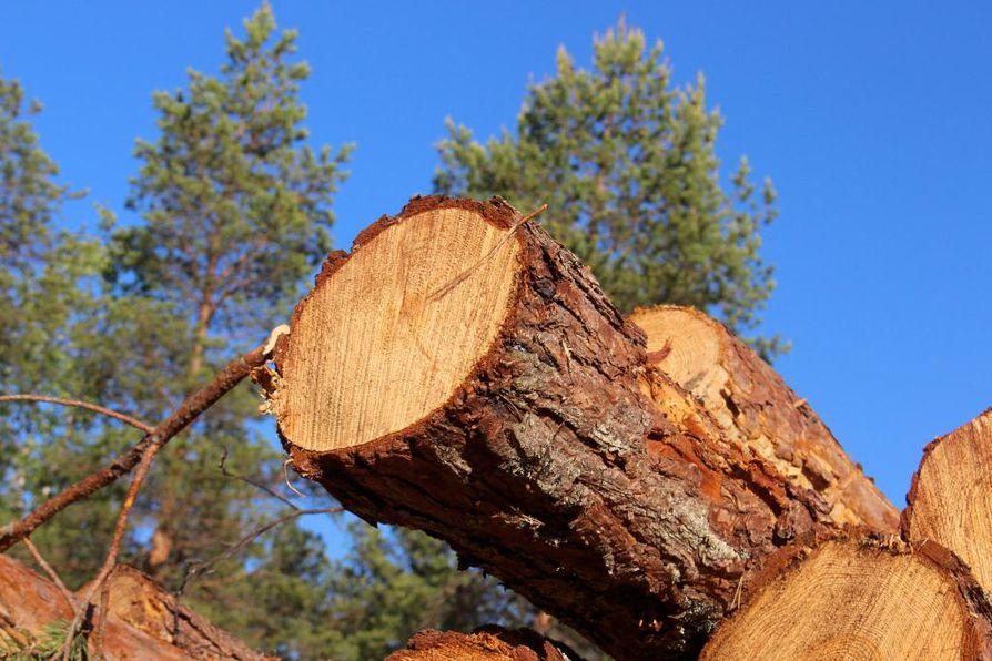 Pohjois-Suomessa ja Lapissa takaraja puiden poistamiselle on Etelä-Suomea myöhemmin.