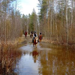 """Hevosille rauhoitettu reitti on joutunut ilkivallan kohteeksi Oulun Kuivasjärvellä ja nyt pyöräilijät ovat eksyneet reitille – """"Läheltä piti -tilanteita on ollut"""", ratsastuskouluyrittäjä harmittelee"""