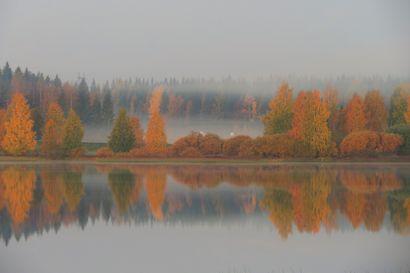 Ruska hohtaa Pohjois-Suomessa komeana – katso lukijoiden kuvia keltaisen ja punaisen loistosta
