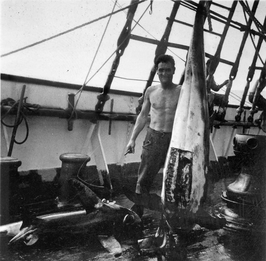 Merimiehet pyydystivät syötäväkseen kaloja 1930-luvulla. Raahen museosta löytyvässä valokuvassa käsitellään haita kolmimastoparkki Penangilla.