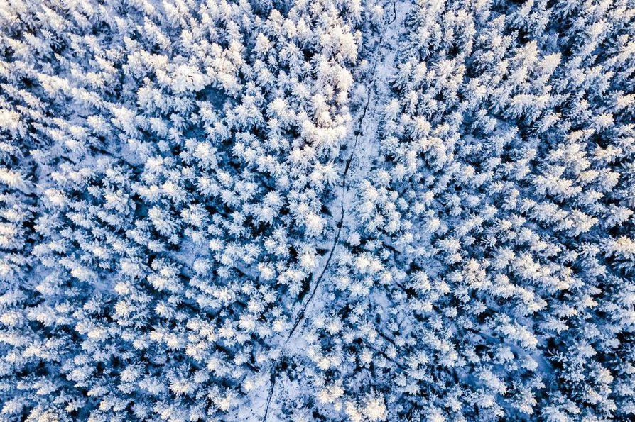 Kirjoittajan mukaan suomalaisilla on väkilukuamme suurempi vastuu maailman hiilinieluista. Kuvaaja Anssi Jokiranta ikuisti talvisen metsän ilmasta Rovaniemen ja Tornin rajalla.