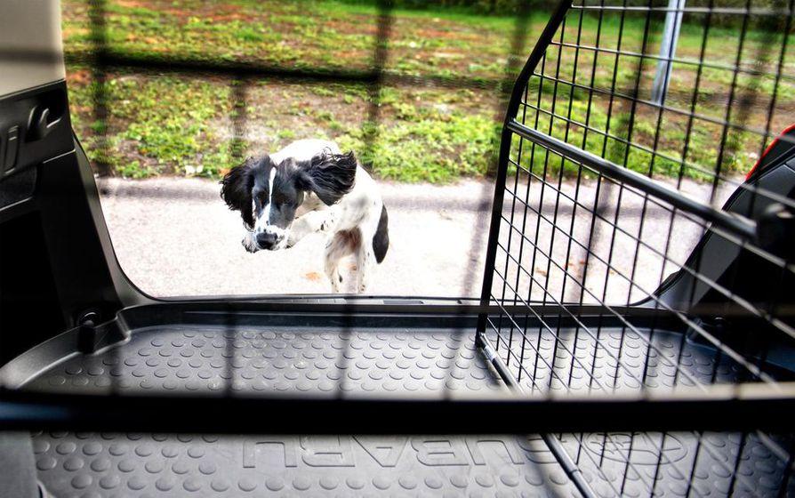 Koiran voi eristää matkatavaroista tilaa jakavan verkkoseinän avulla.