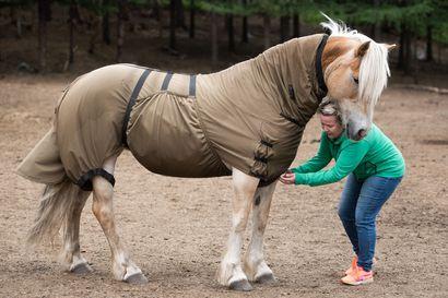 """'Alikessun natsat' ihoon ja ryystöpuuhiin – moni paarmalaji kuoriutui nyt samanaikaisesti eikä teräviltä suuosilta välty mikään: """"Hevosillakin on pitänyt olla suojia"""""""
