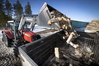 Talven polttopuukauppa on ollut ennätysvilkasta – myös kesällä menevän puun määrä kasvussa