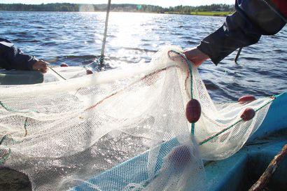 Avustukset kalatalouden edistämiseen ovat parasta aikaa haettavana Ely-keskuksista