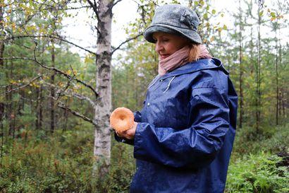 Ensin kerätään tatteja ja haperoita, sitten rouskuja ja suppilovahveroita – sienisadosta voi nauttia pitkälle syksyyn keräämällä talteen myöhäisiä lajeja
