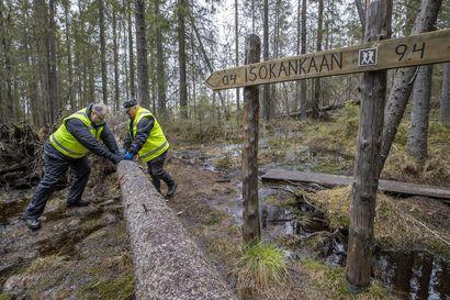 """Sanginjoen metsään kansallispuiston kokoinen luonnonsuojelualue–""""Työryhmissä tahtoivat tunteet välillä kuumentua"""", muistelee Kalle Hellström 16 vuotta kestänyttä suojelukiistaa"""