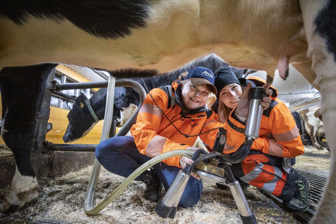 Tuilla kitkuttelua vai paimenidylliä – liminkalaiset Hanna Luukinen ja Maija Kylmänen perustivat podcastin, koska halusivat kertoa, millaista elo maalla ja maatalousyrittäjänä oikeasti on