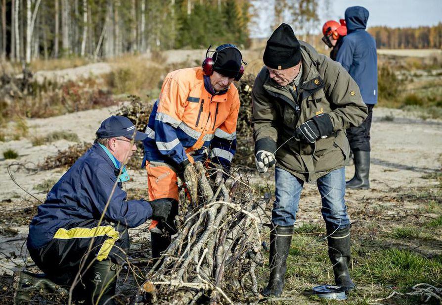 Kimmo Ervasti (vas.),  Juhani Mahosenaho ja Timo Yliuntinen kiristävät puunipun köysillä ja rautalangalla tiukaksi paketiksi.