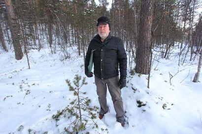 Ympäristöjärjestö luokitteli arvometsiksi – näin metsäyhtiöt säikytettiin pois puukaupoilta